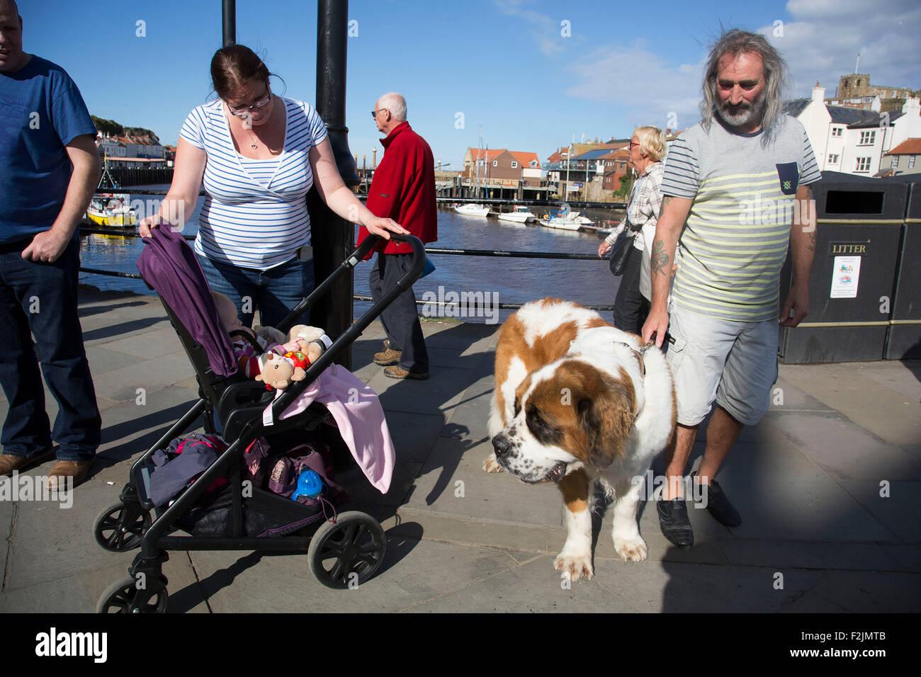 Whitby scheint eine besondere Affinität mit Hundehaltern, diesmal einen Bernhardiner haben. Yorkshire, Vereinigtes Stockbild