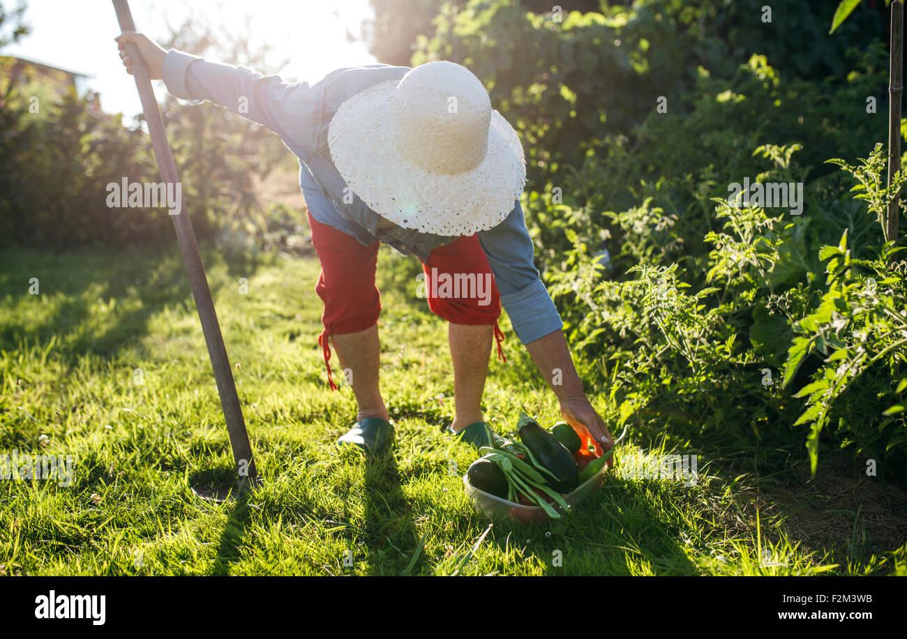 Garden plant stockfotos garden plant bilder alamy for Garten arbeiten