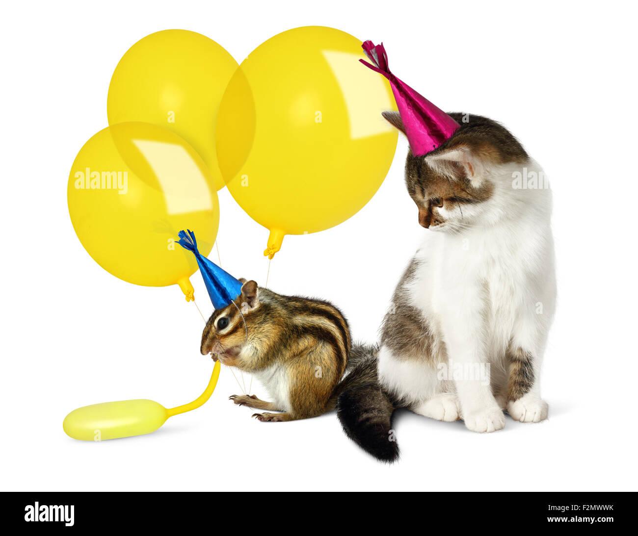 Geburtstag Konzept Lustige Katze Und Streifenhornchen Mit