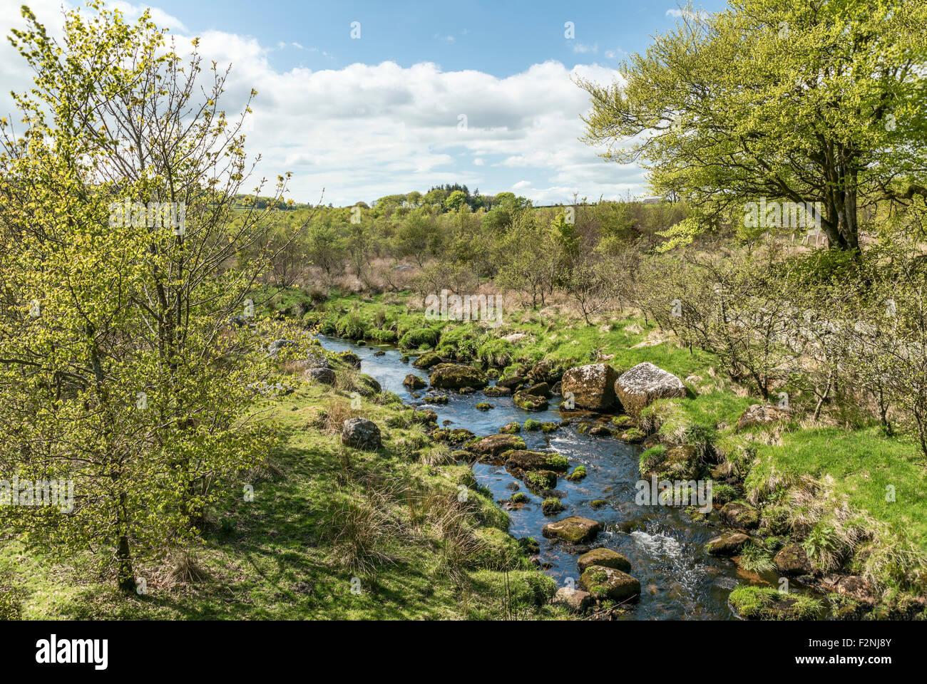 Landschaft im Nationalpark Dartmoor, Devon, England, UK   Landschaft Im Nationalpark Dartmoor, Devon, England, UK Stockbild