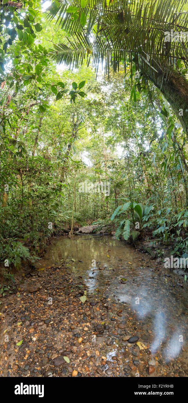 Kies Boden Bach Durch Tropischen Regenwald Im Ecuadorianischen