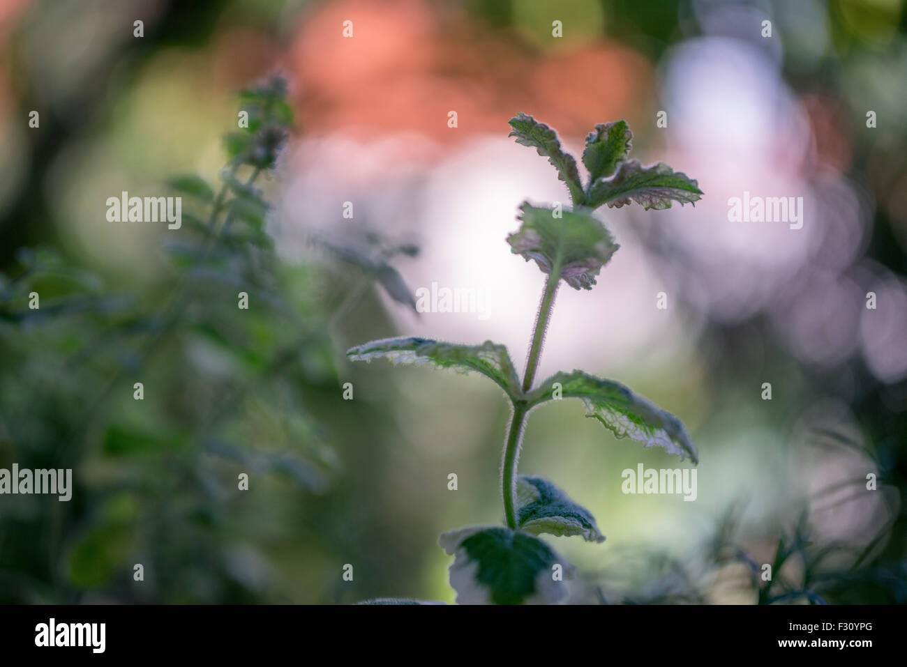 Sprudelnde Bokeh produziert von Flektogon 35/2.4 Objektiv von Carl Zeiss Jena Stockbild