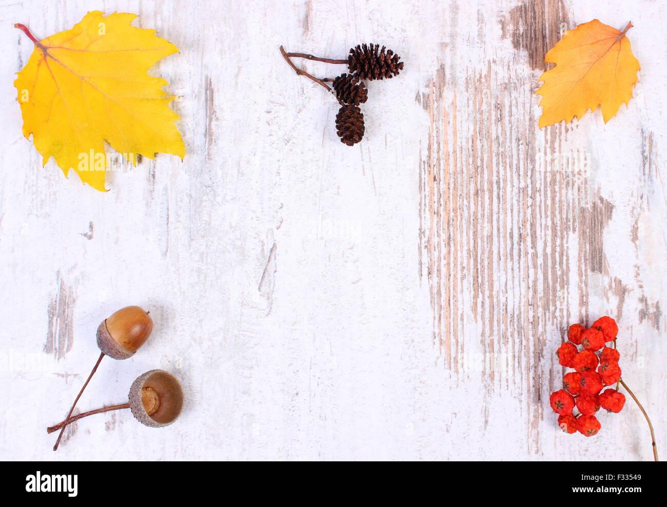 Herbstliche Dekoration und Kopie Platz für Text auf alten rustikalen hölzernen Hintergrund, gelbe Blätter, rote Stockfoto