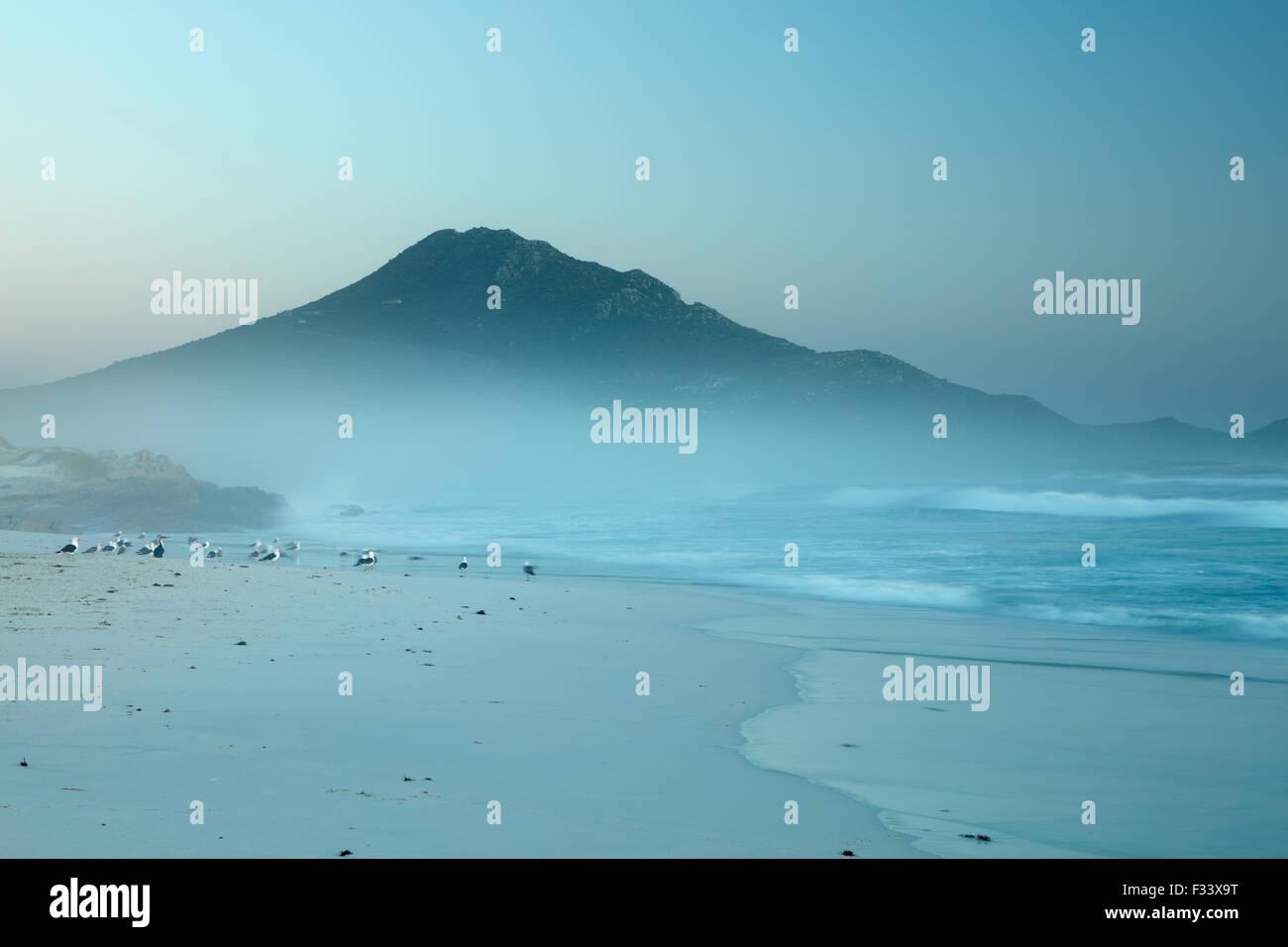 Kormorane und Möwen am Platboom Strand und das Kap der guten Hoffnung, Cape Point, Südafrika Stockbild