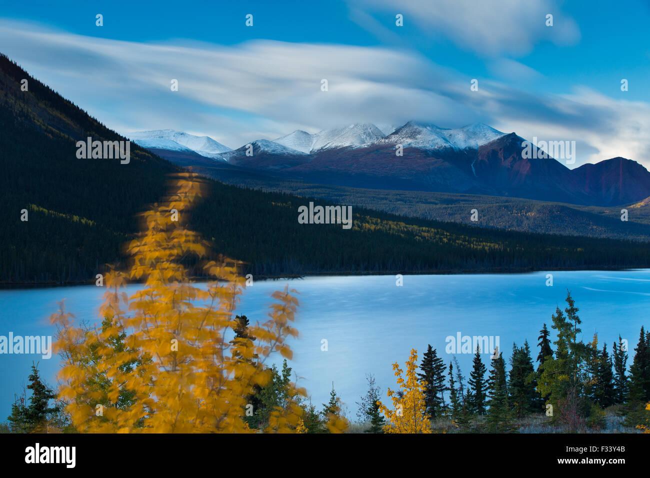 Herbstfärbung bei Nares Lake mit Montana Berg darüber hinaus, in der Nähe von Carcross, Yukon Territorien, Stockbild