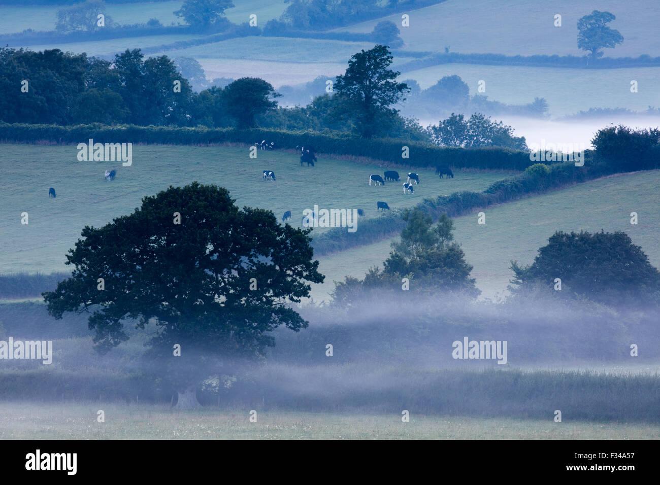 ein nebliger Morgen in der Nähe von Milborne Wick, Somerset, England, UK Stockbild
