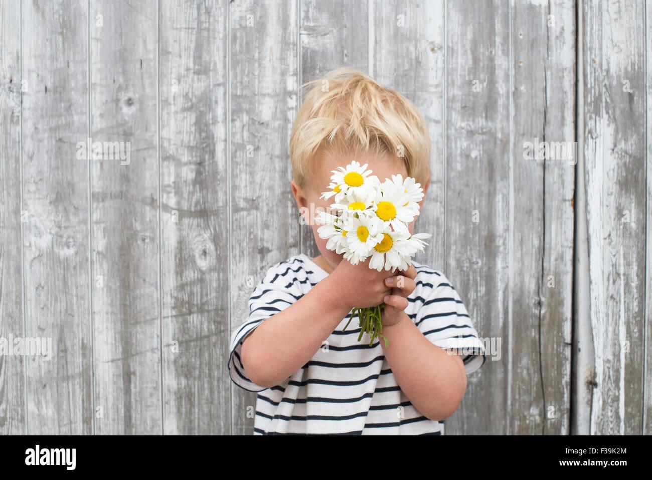 Junge versteckt sich hinter Gänseblümchen Stockbild