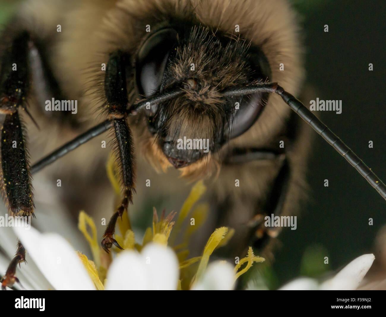Bumble Bee Tücher Antenne Stockbild
