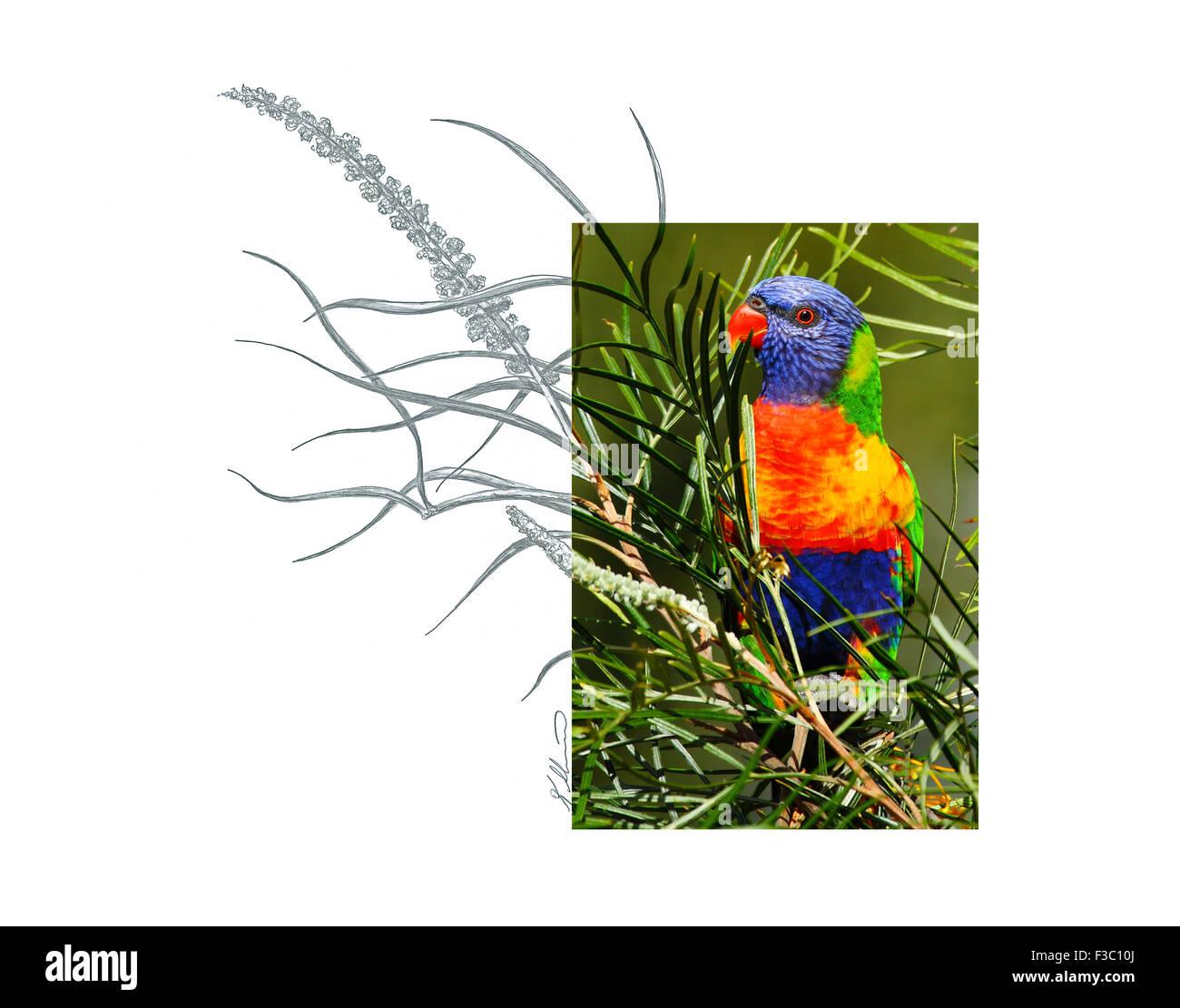Parrot Bird Sketch Stockfotos & Parrot Bird Sketch Bilder - Alamy