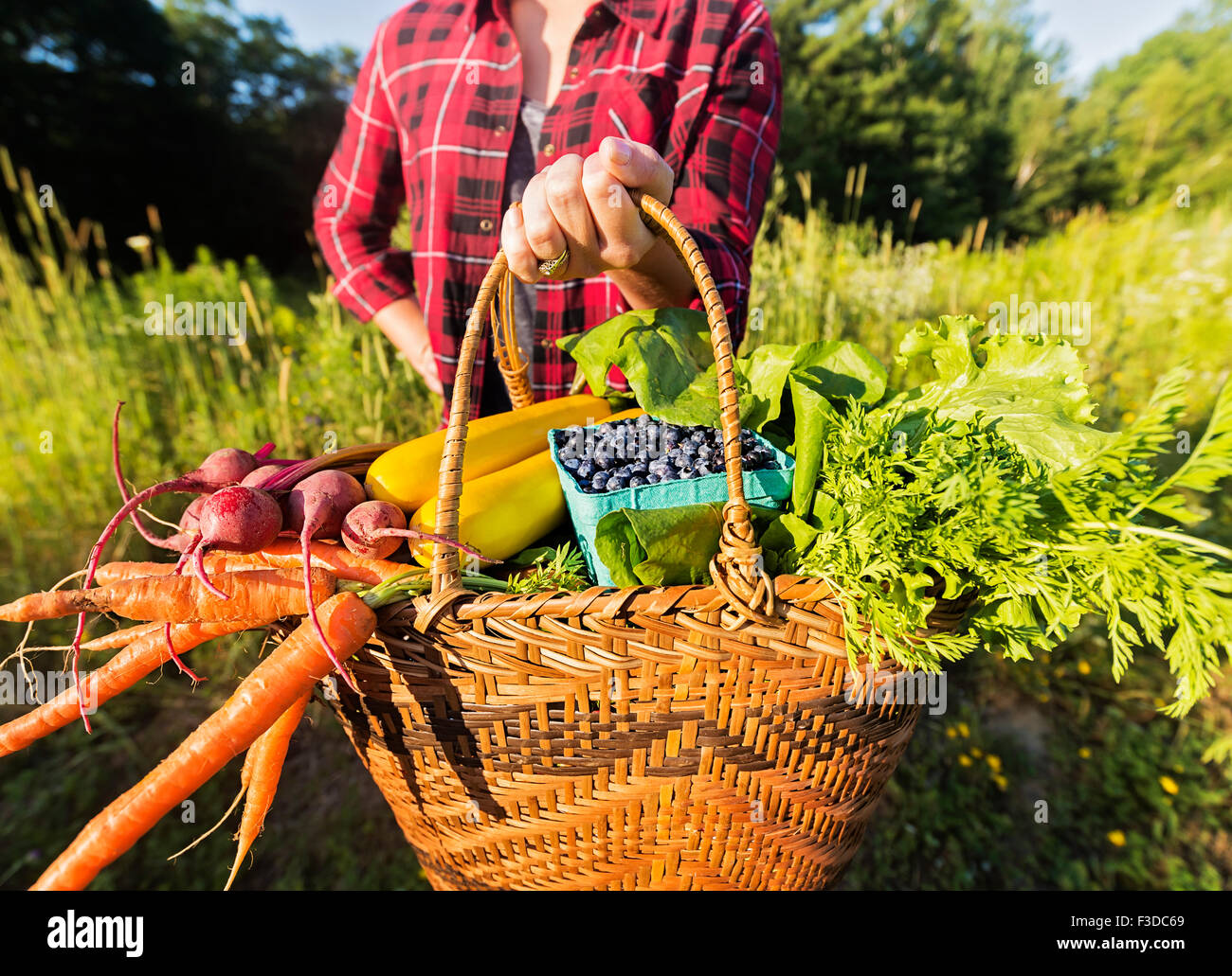 Mittleren Bereich der Frau hält Korb mit Obst und Gemüse Stockbild
