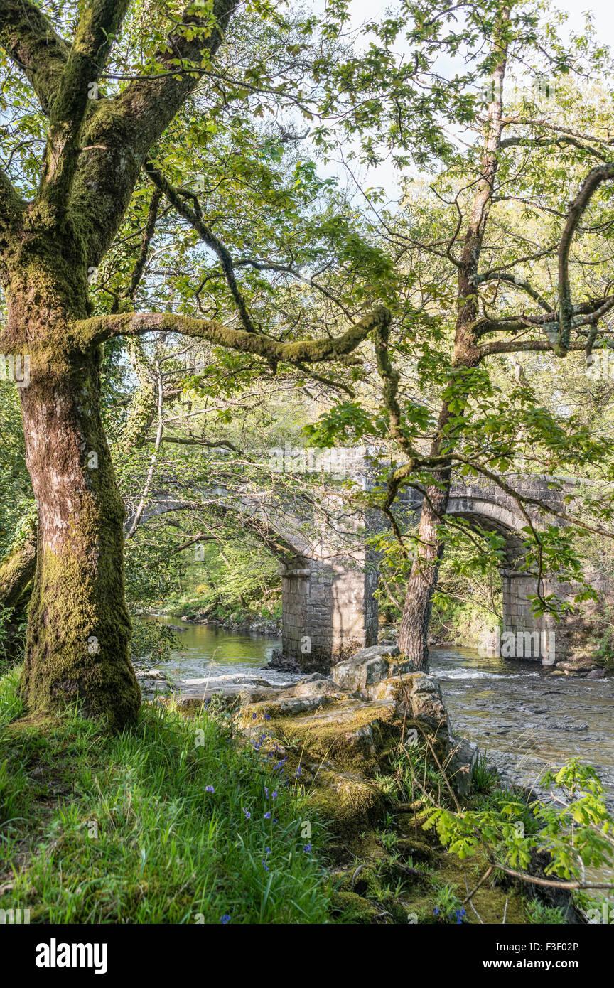 Riverside Eichenwald im Dartmoor National Park, Devon, England, UK   Landschaft Im Nationalpark Dartmoor, Devon, Stockbild