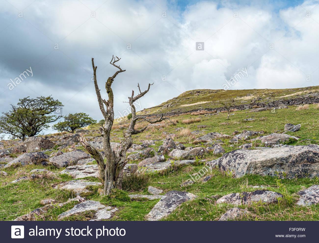 Landschaft im Nationalpark Dartmoor, Devon, England, UK | Landschaft Im Nationalpark Dartmoor, Devon, England, UK Stockbild