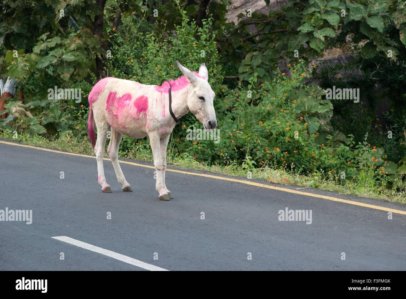 Esel; Transportmittel, waren auf hügeligen Regionen Champaner Pavagadh zu tragen; Panchmahals Bezirk; Gujarat Stockbild