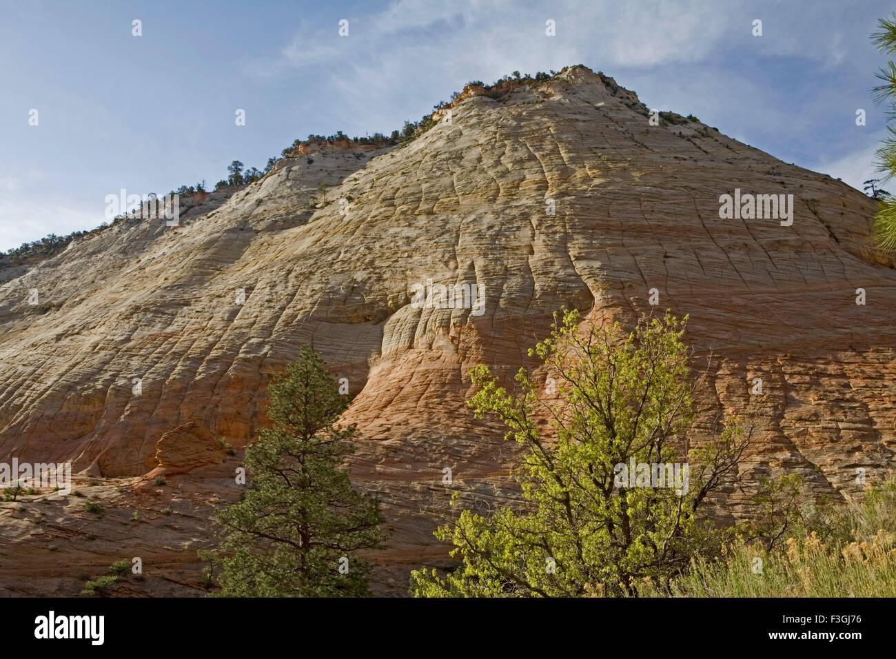 Checkerboard Mesa prominente natürlich geformte Kunst Frakturen Zion CanyonNationalpark; VEREINIGTE STAATEN Stockbild