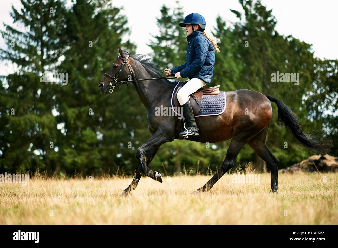 Mädchen-Reitpferd im Feld Stockbild