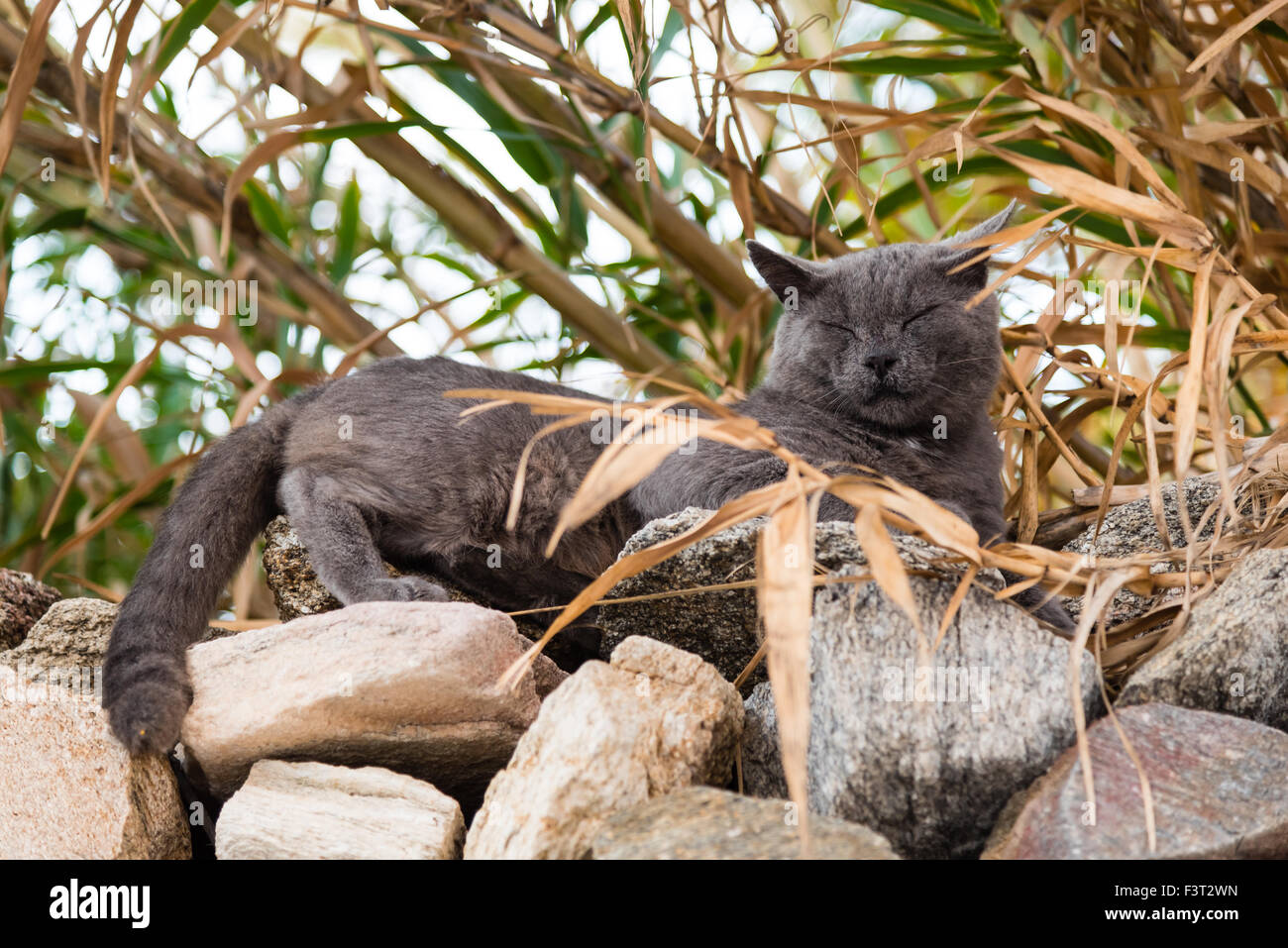 black cat nap sleep stockfotos black cat nap sleep bilder alamy. Black Bedroom Furniture Sets. Home Design Ideas