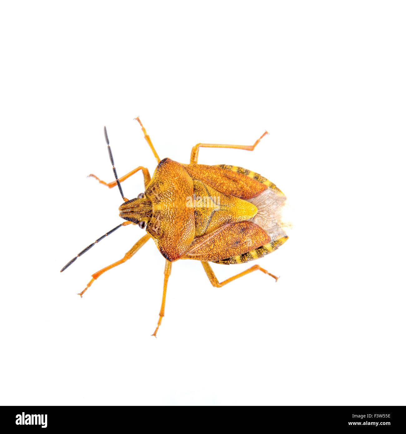 Gemütlich Bug Färbung Blatt Zeitgenössisch - Beispiel Wiederaufnahme ...