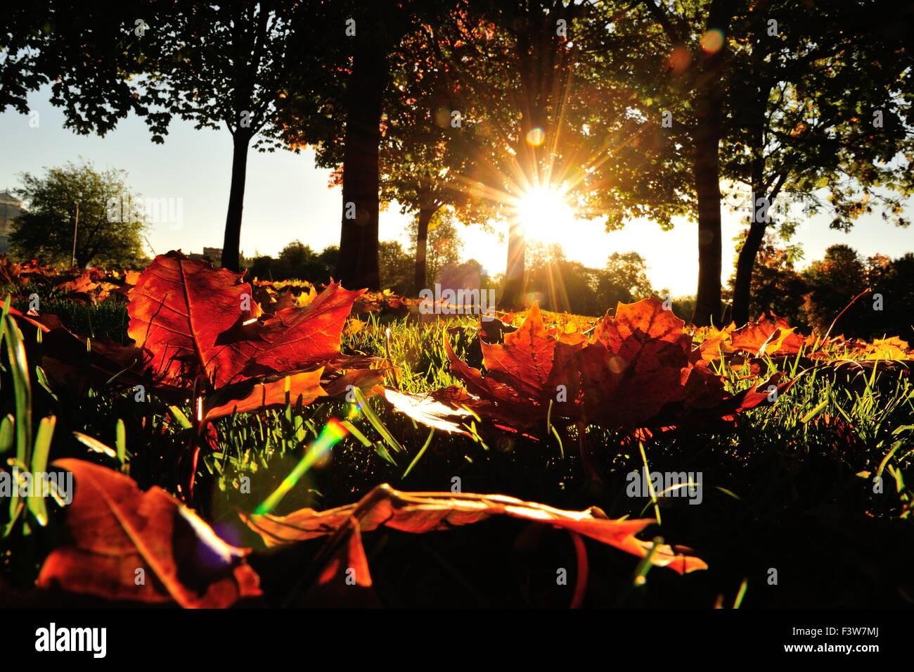 Glasgow Schottland 13 Oktober 2015 Uk Herbstwetter