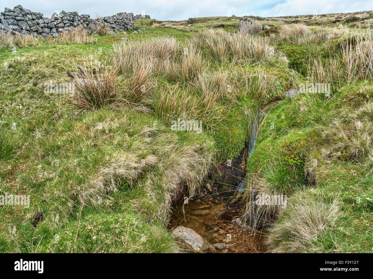 Kleine Wasser-Strom an der Dartmoor National Park, Devon, England, UK   Wasserlauf Im Dartmoor Nationalpark, England, Stockbild