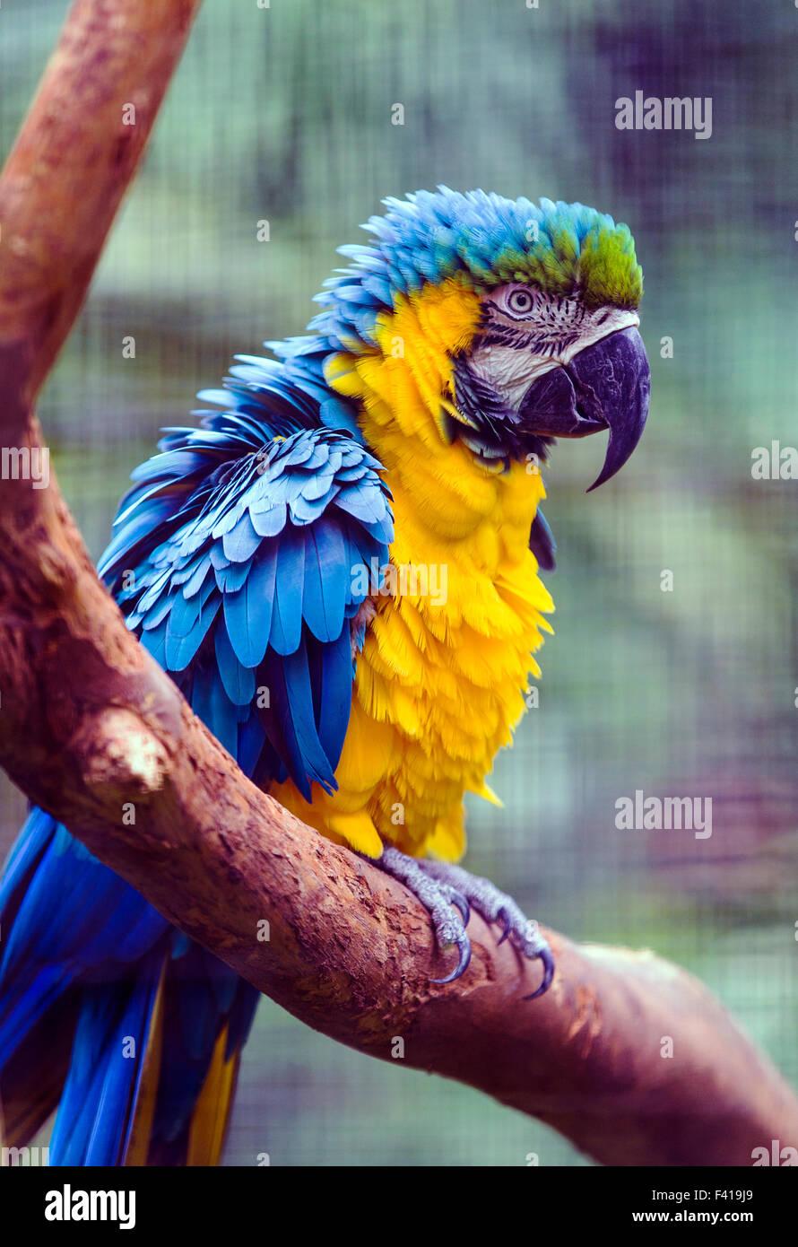 Bunte Papagei, Hawai ' i tropischen botanischen Garten-Naturschutzgebiet; Big Island, Hawaii, USA Stockbild