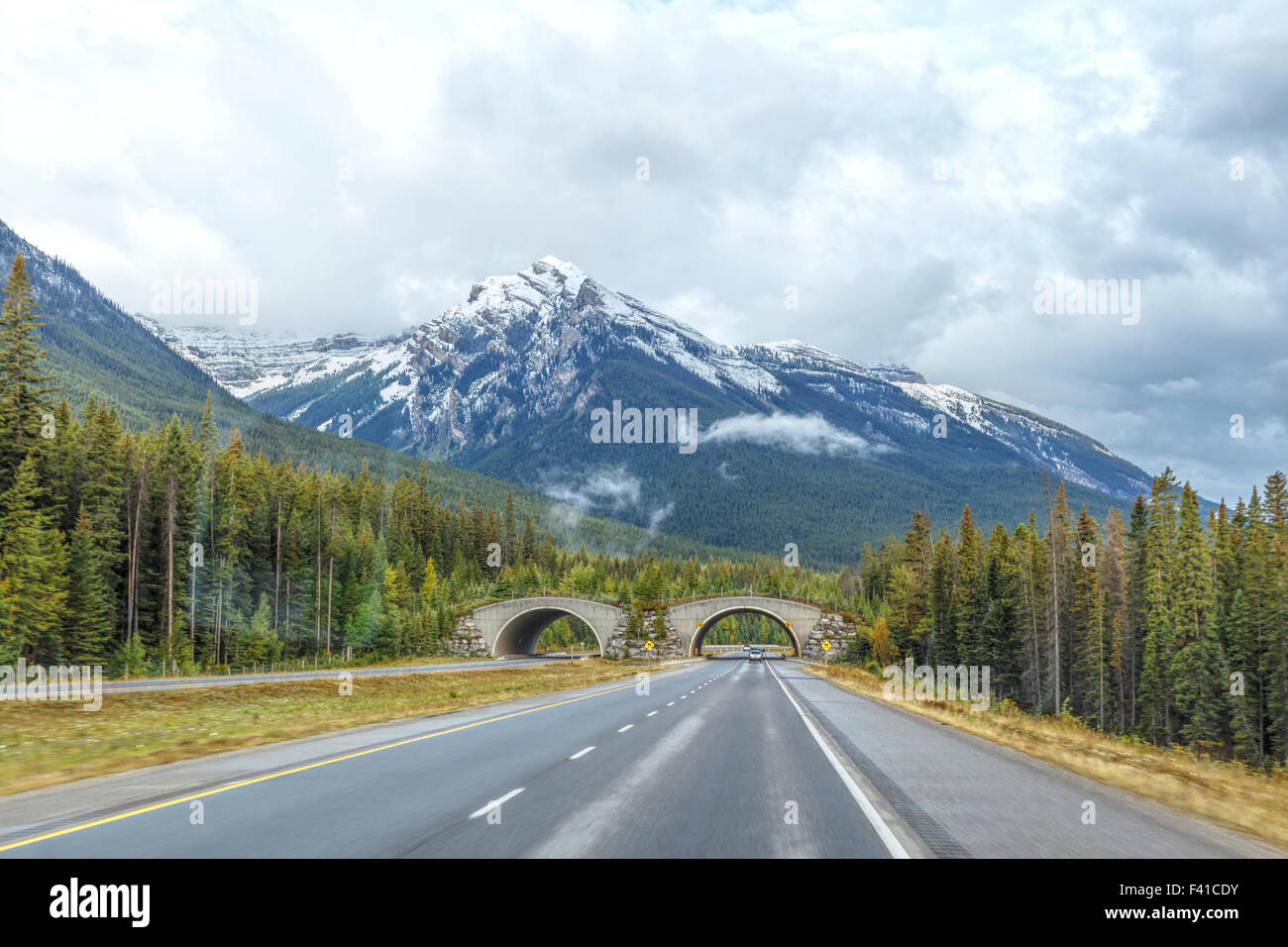 Tierwelt-Kreuzungen über Tunnel entlang der Trans-Canada Highway, Banff Nationalpark, Rocky Mountains, Alberta, Stockbild
