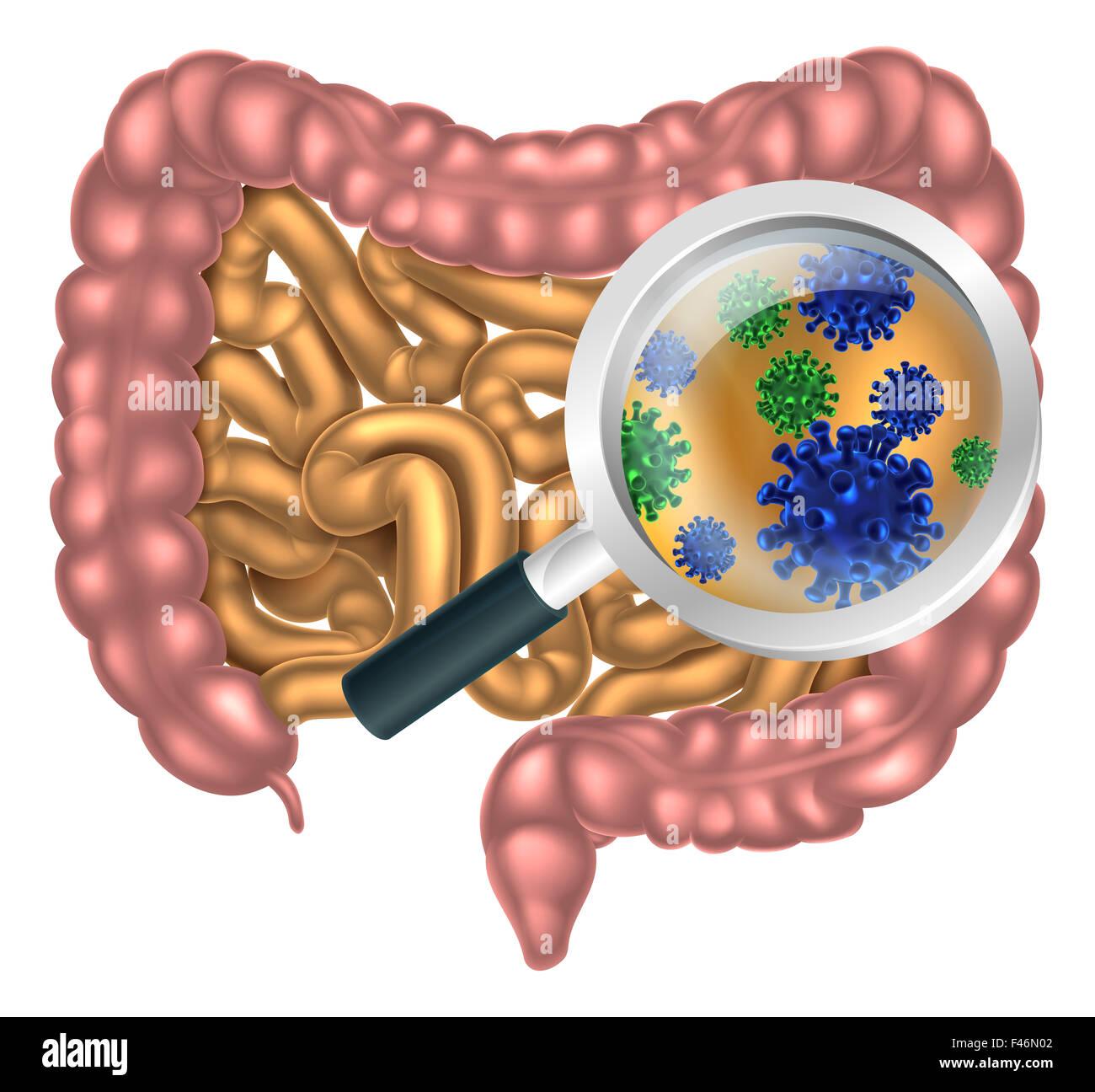 Ungewöhnlich Darm System Zeitgenössisch - Menschliche Anatomie ...