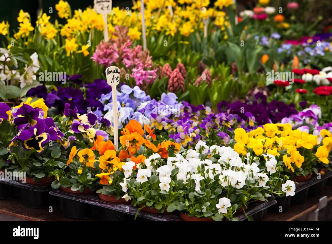 Blumen Auf Dem Markt, Blumen auf einem Markt Stockbild