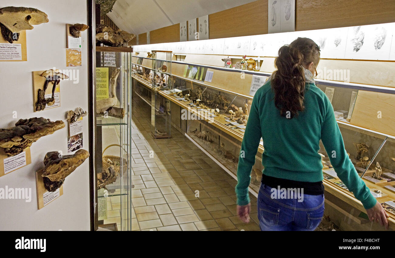 Das Pilz-Museum in Bad Laasphe. Stockbild