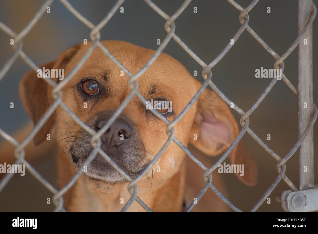 Großzügig Lowe Drahtzaun Für Hunde Bilder - Elektrische Schaltplan ...