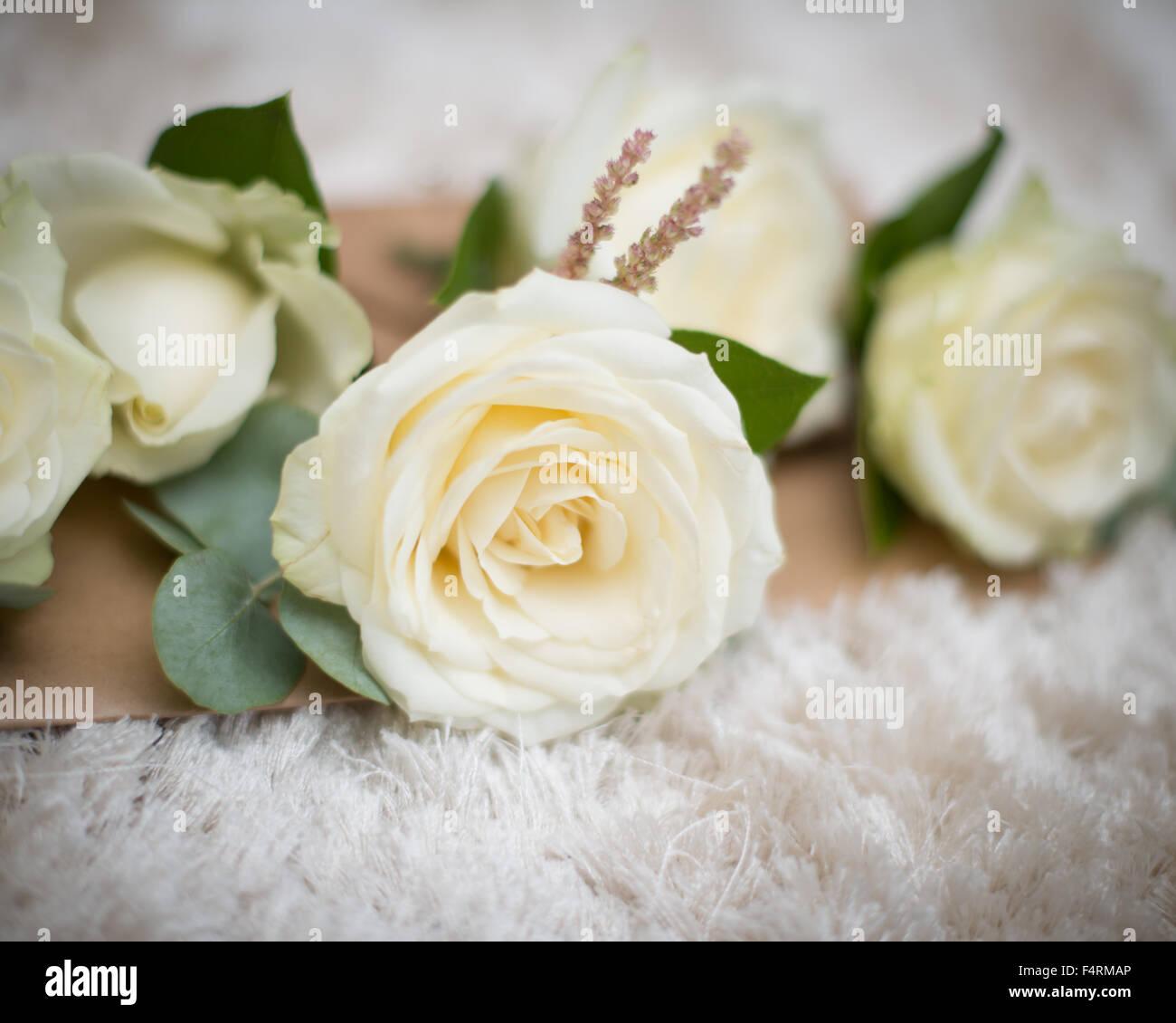 Corsage Taste Loch Creme Rose Mit Grunem Laub Fur Hochzeit Stockfoto