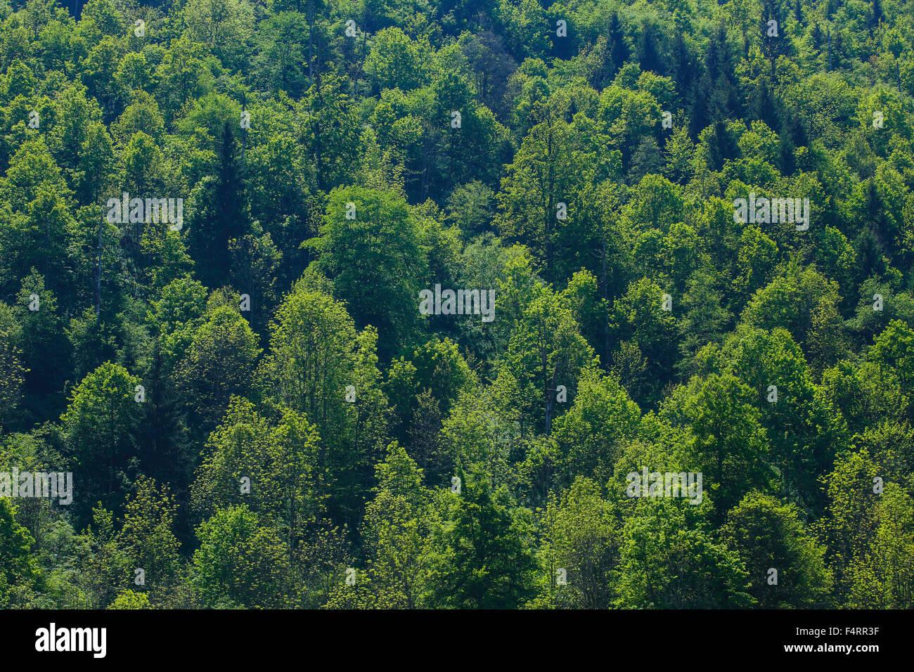 Schneiden, Teil, Baum, Buche, Bäume, Detail, Frühling, Kanton Glarus, Hintergrund, Abstrakt, grüne, Stockbild
