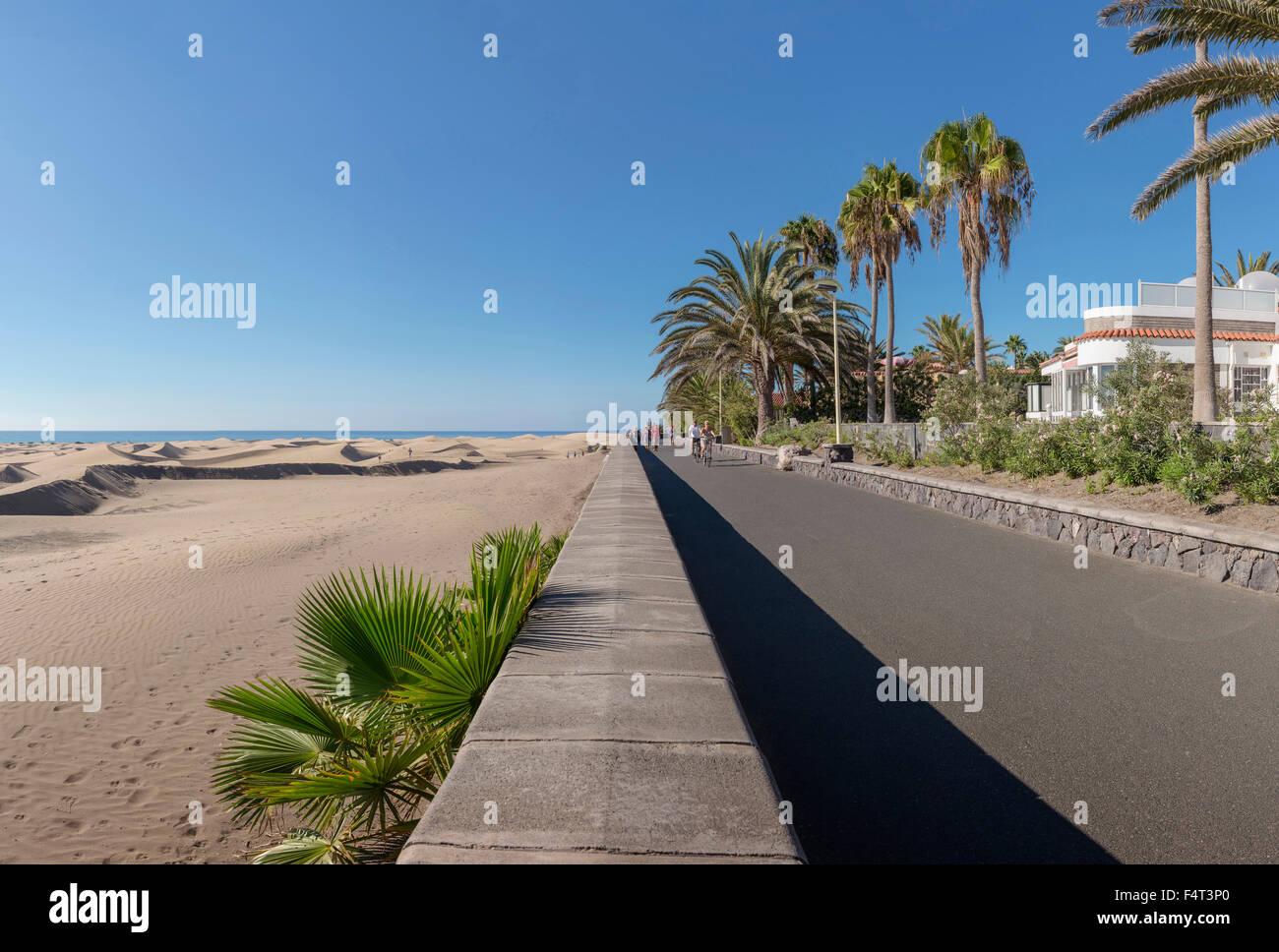 Spanien, Europa, Playa del Ingles, Gran Canaria, Kanarische Inseln, Paseo Costa Canario, Landschaft, Wald, Holz, Stockbild