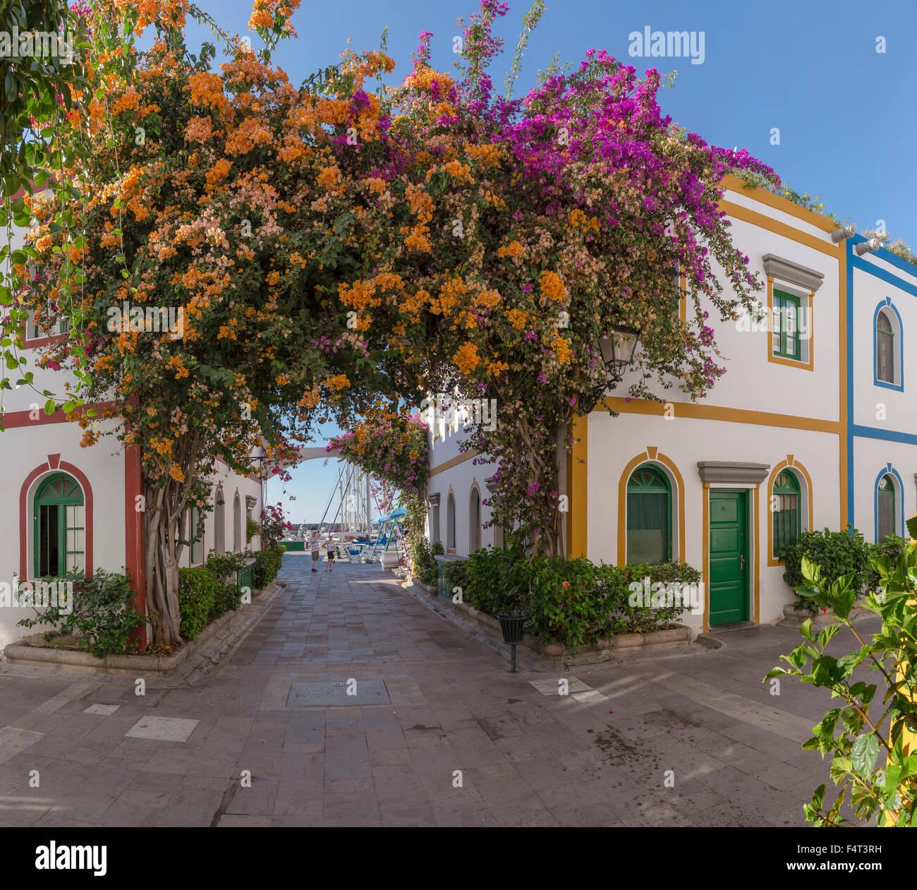 Spanien, Europa, Puerto de Mogan, Gran Canaria, Kanarische Inseln, Urlaub, Dorf, Stadt, Dorf, Blumen, Sommer, Stockbild