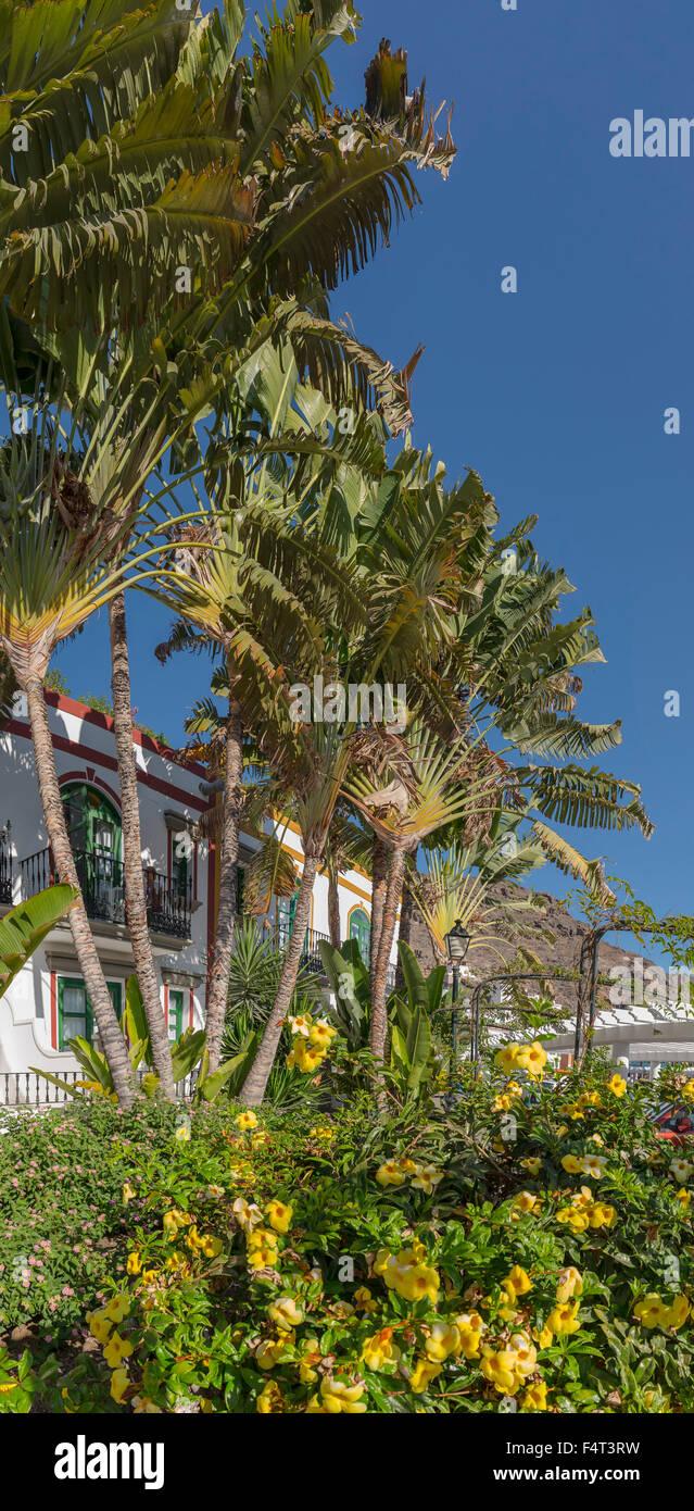 Spanien, Europa, Puerto de Mogan, Gran Canaria, Kanarische Inseln, Urlaub, Dorf, Stadt, Dorf, Blumen, Bäume, Stockbild
