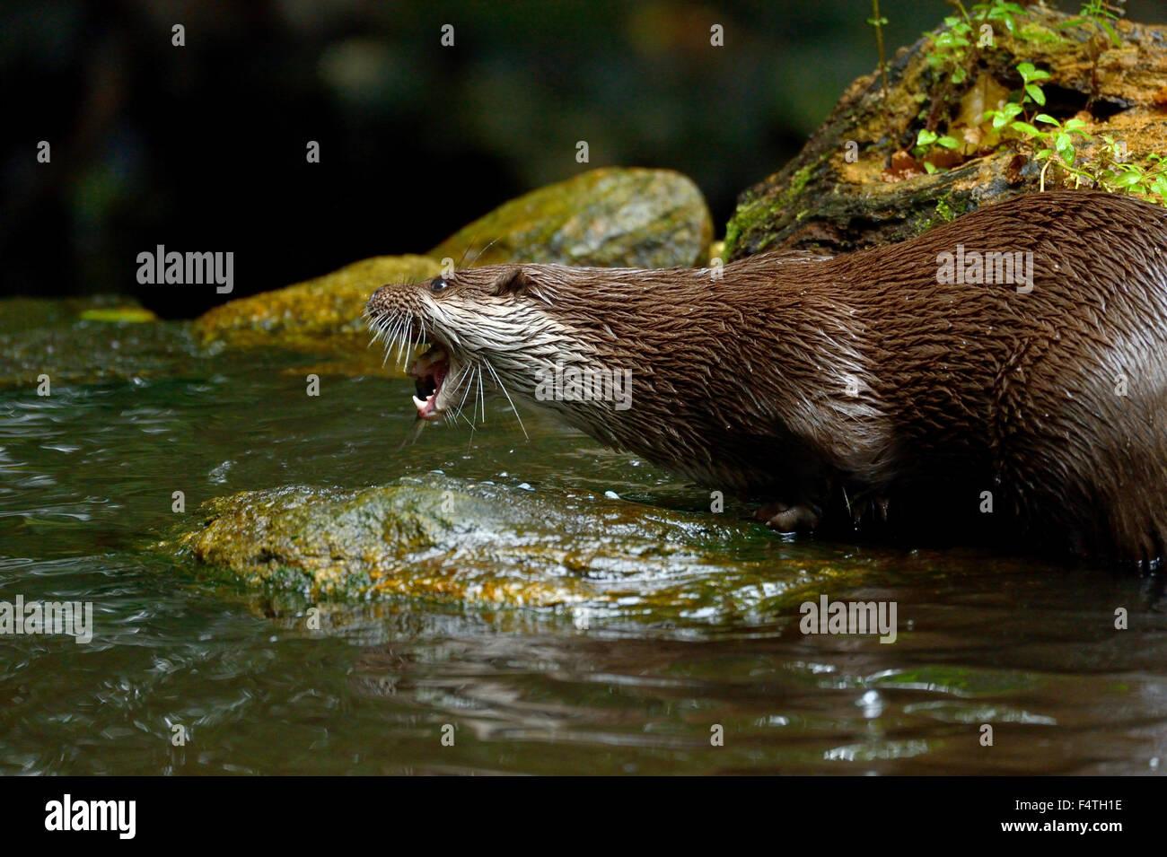 Otter Stockbild