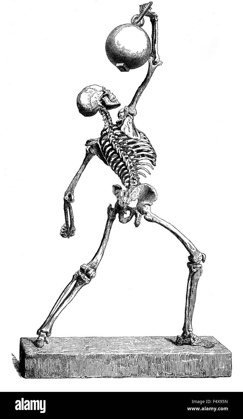 Anatomie: Menschliche Knochen Struktur, Vintage Gravur Stockfoto ...