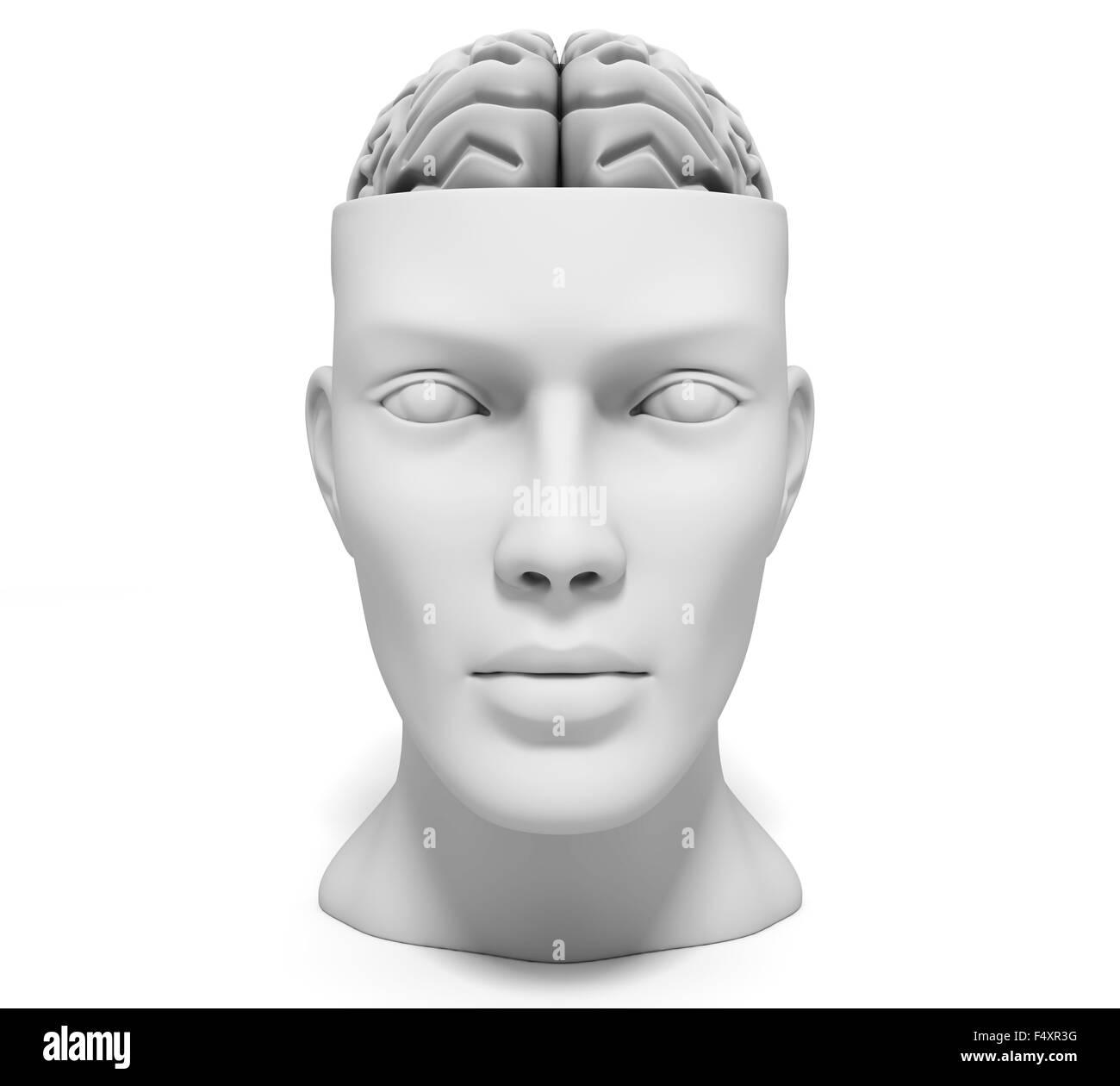 Ein menschlicher Kopf mit Gehirn Stockbild