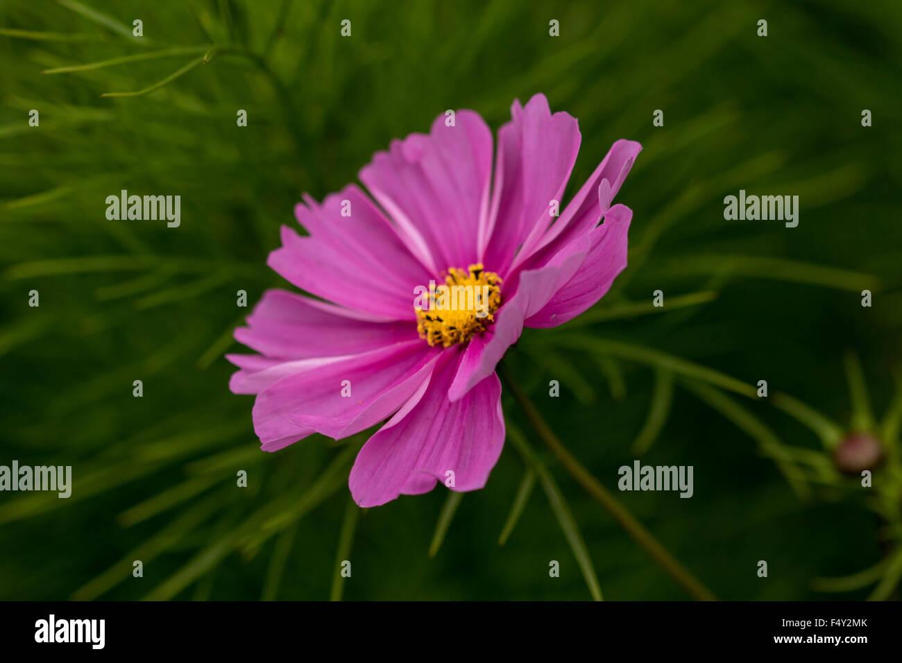 Makro-Ansicht einer Blume Stockbild