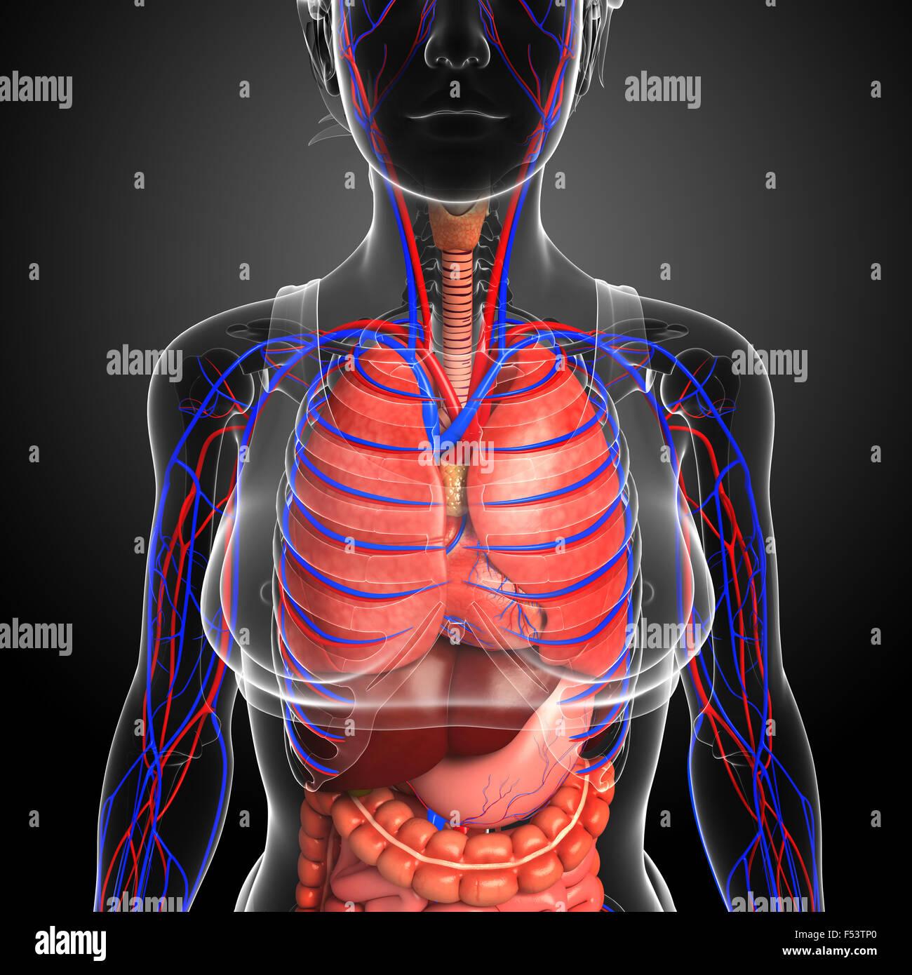 Fantastisch Anatomie Und Physiologie Der Sprachproduktion Ideen ...