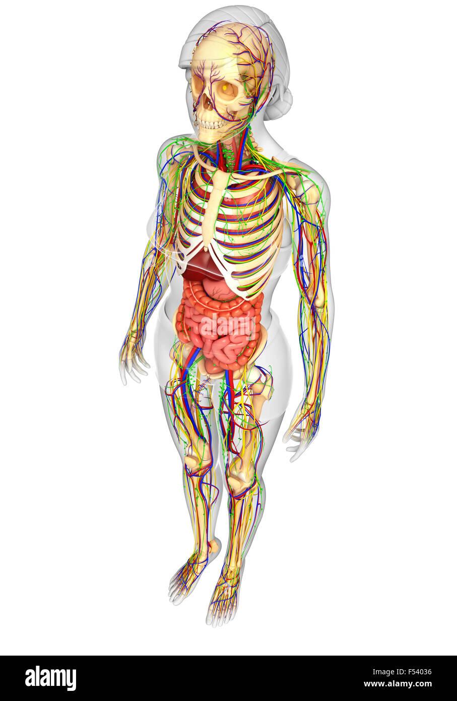Niedlich Skelett Nervensystem Galerie - Menschliche Anatomie Bilder ...