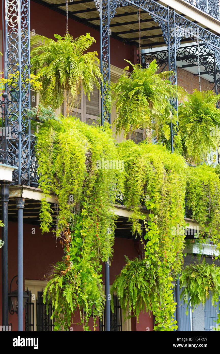 hngepflanzen fr balkonwelche pflanzen sind auf den balkon zu. Black Bedroom Furniture Sets. Home Design Ideas