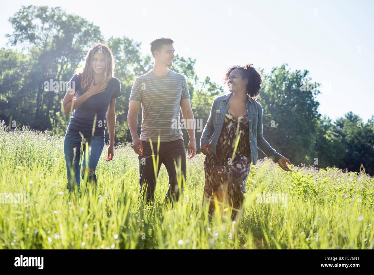 Drei Menschen, ein Mann und zwei Frauen, die zu Fuß durch hohe Gräser auf einer Wiese. Stockbild