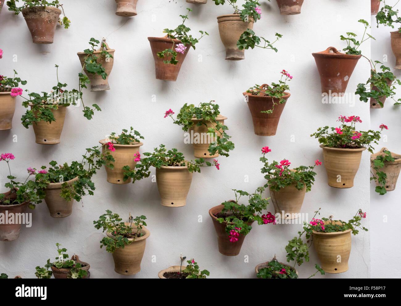 Garten im Innenhof, vertikale Garten - Blumen in Töpfe zu einer weißen Wand befestigt Stockbild