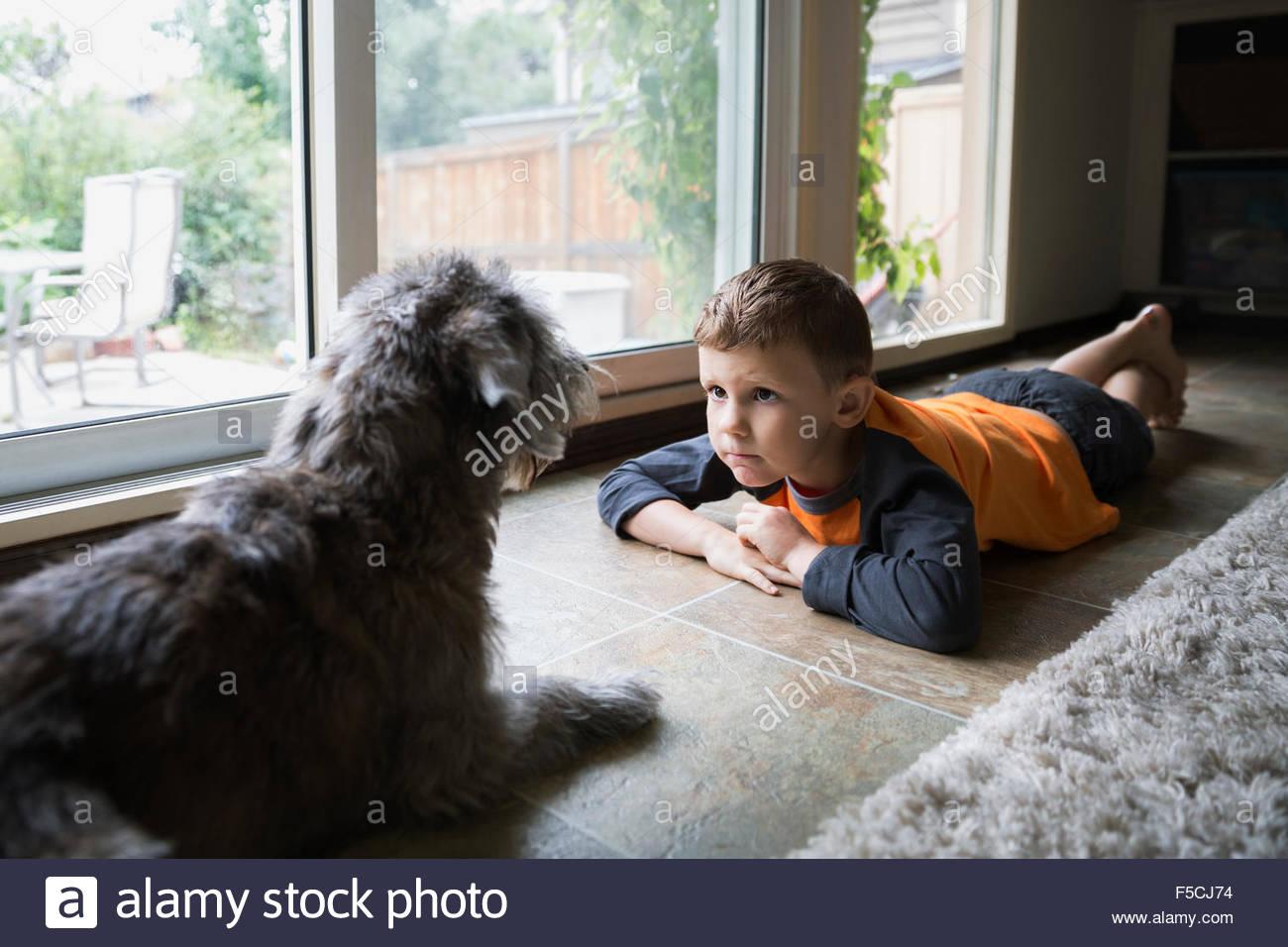 Ernste junge starrte Hund am Boden Stockbild