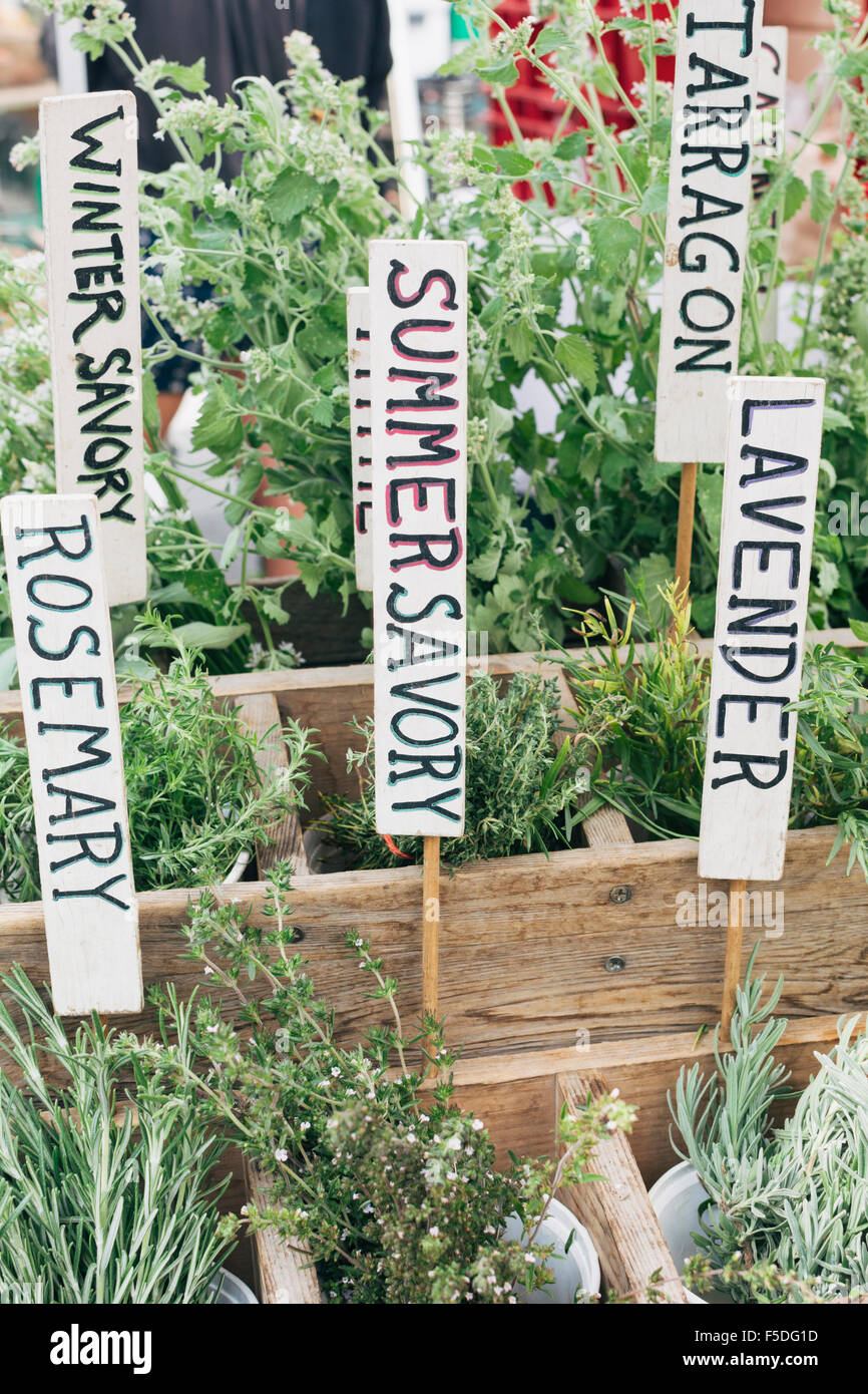Frische Kräuter wie Rosmarin, Bohnenkraut, Lavendel, Estragon und Winterbohnenkraut Stockbild
