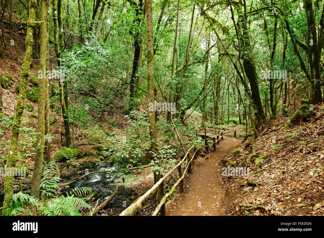 Lorbeerwald, Parque Nacional de Garajonay, UNESCO-Weltkulturerbe, La Gomera, Kanarische Inseln, Spanien, Europa Stockbild