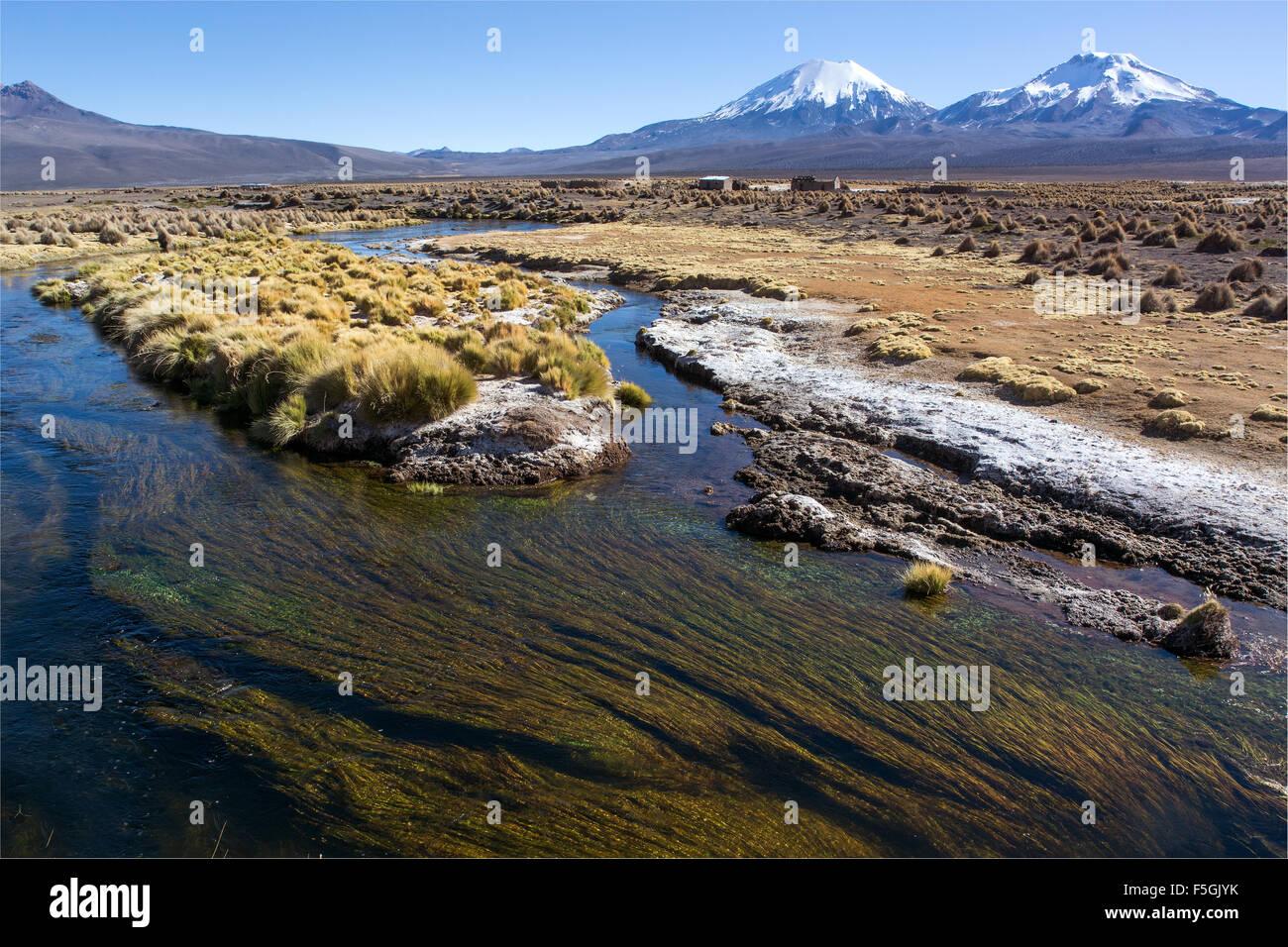 Fluss und Wasserpflanzen vor schneebedeckten Vulkane Parinacota, pomerape und Sajama Nationalpark Stockbild