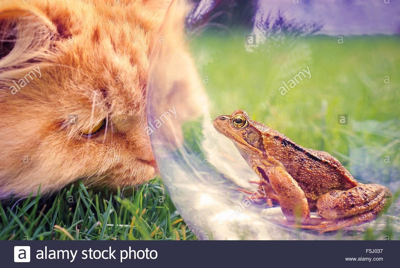 Highlander und Frosch Stockbild