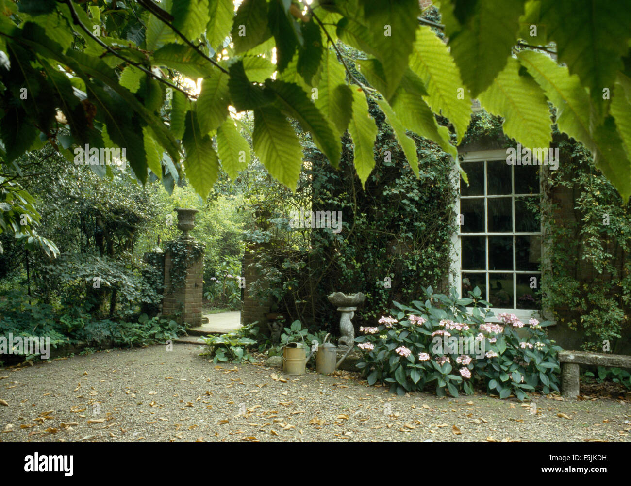 Hortensien Wachsen Unter Grossen Landhaus Fenster Stockfoto Bild