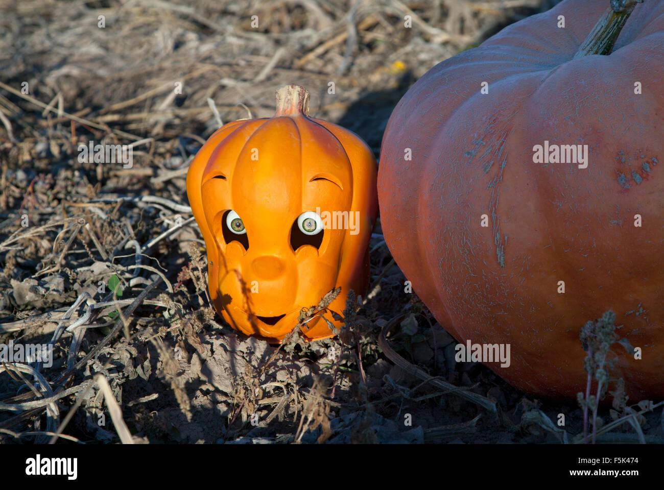 Erfreut Frei Druckbare Halloween Kürbis Malvorlagen Zeitgenössisch ...